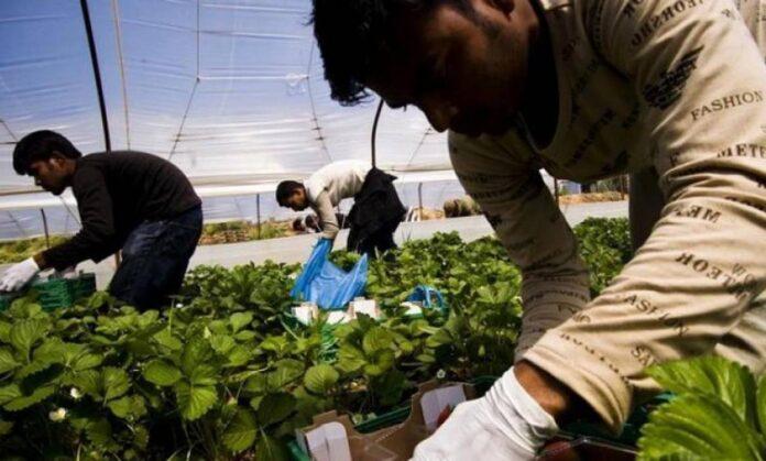 Μέχρι 15 Ιουνίου οι αιτήσεις για εργάτες γης από τρίτες χώρες