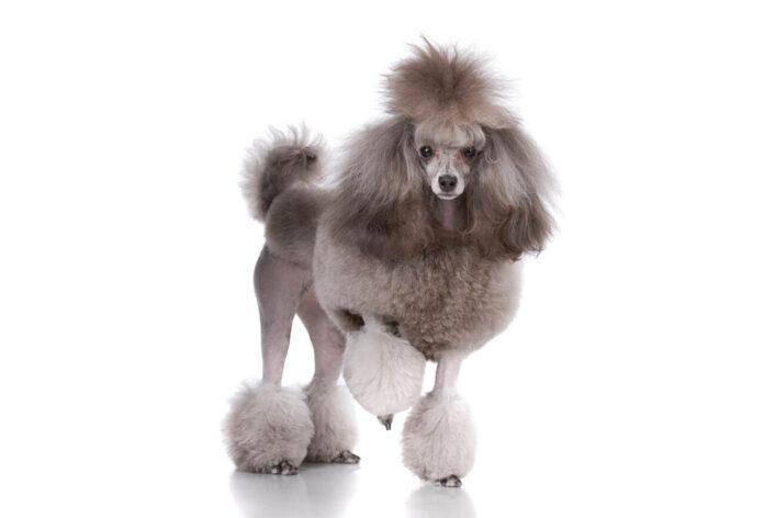 Παράξενη ιστορία: Ο σκυλορουφιάνος και το 1 εκατ. ευρώ