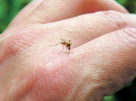 Κουνούπια: Οι λόγοι που σας τσιμπούν
